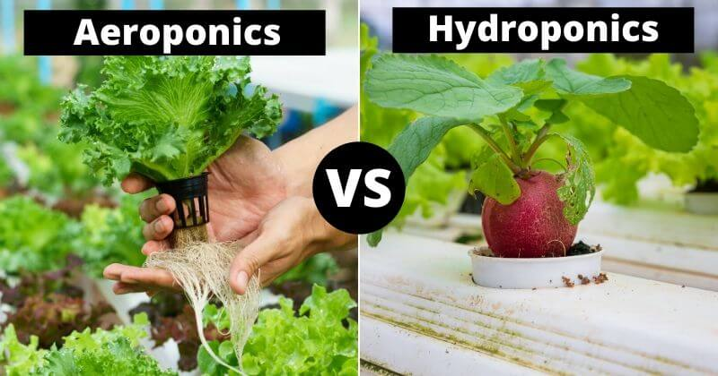 Aeroponics Vs. Hydroponics_ What's The Difference_ And Which Is Better