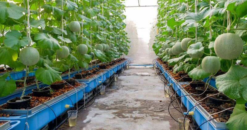 Growing Hydroponic Trees_ Learn How To Grow Tress Hydroponically