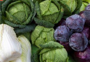 14 Different Types Of Tasty Cabbage Varieties To Grow In Your Garden