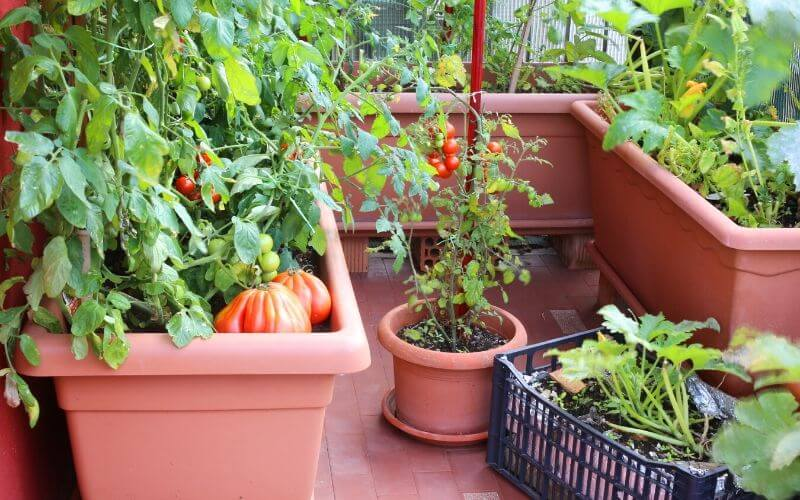 Best Vegetables To Grow In Pots And Containers