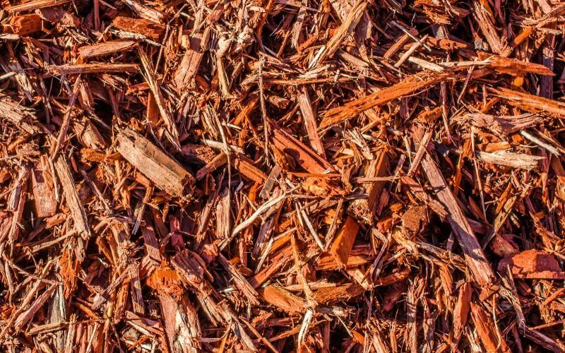 The Pros And Cons Of Using Cedar Mulch In Gardens