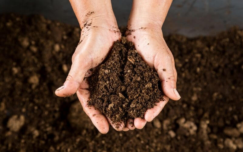 Peat Moss: What it is and How To Use It In The Garden