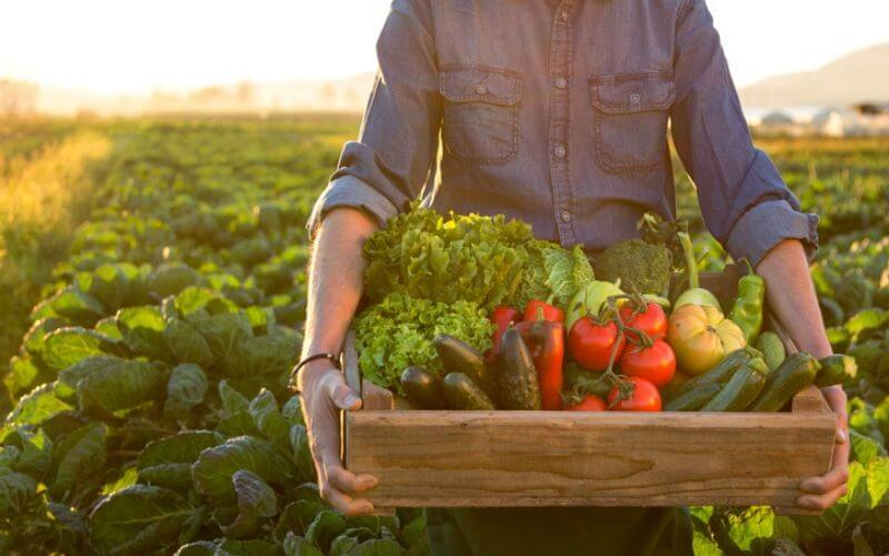 13 Vegetables to Plant in Fall for Spring Harvest This Year