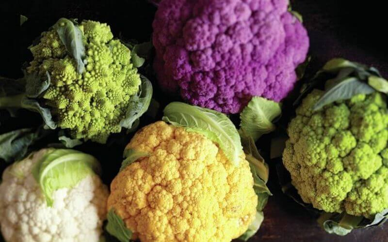 20 Delicious Broccoli Varieties to Grow This Year