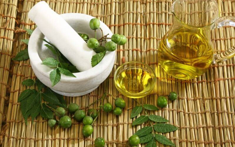How Use Neem Oil on Plants as an Organic Insecticide