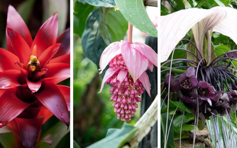 Tropical Flowering Plants (1)