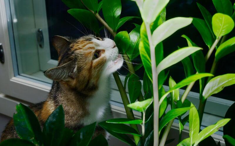 ZZ Plant Toxicity_ Is The ZZ Plant Poisonous To Cats, Dogs Or Children_