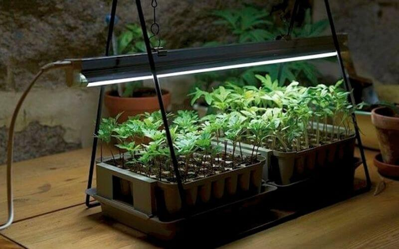 How To start growing plants indoors with artificial light