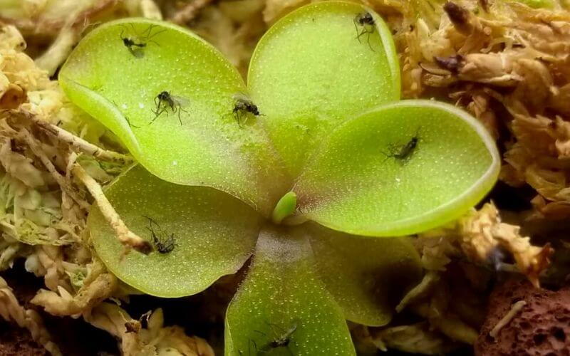 How to Get Rid of Gnats in Houseplants