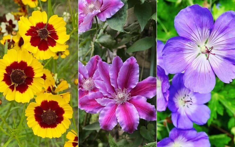 Long Blooming Perennials (2)