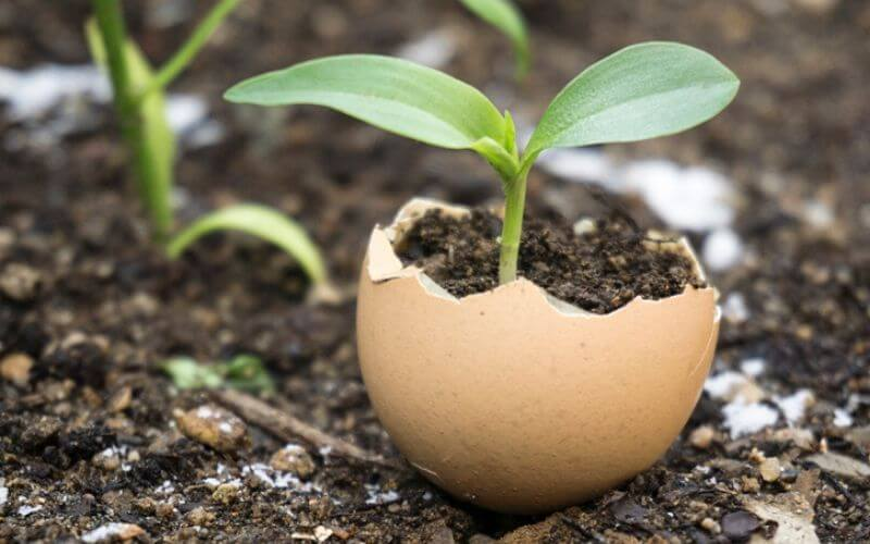 Eggshells For The Plants: Using Eggshells In The Garden For Soil, Compost, And As Pest Control