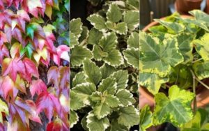 How to Identify Ivy Types (2)