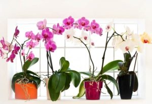 22 Types Of Orchids That Do Well Indoor And How To Grow Them