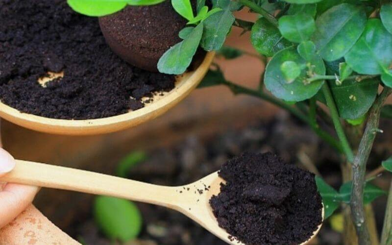 coffee grounds for houseplants: are They good for Your Indoor Plants