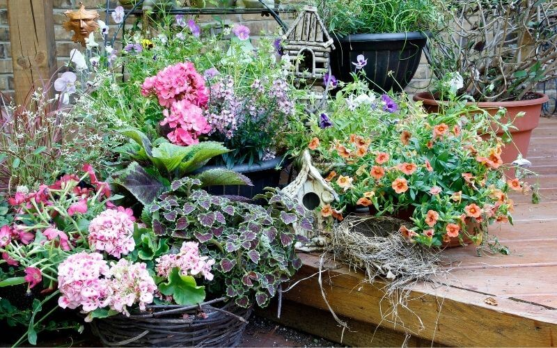 Potted Shade Flowers: 20 Great Shade-Loving Plants For Containers