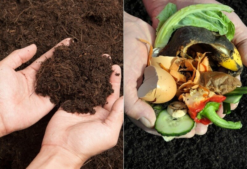 Humus vs. Compost: What's the Difference?