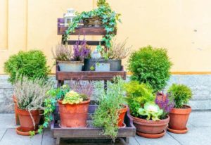 How To Get Rid Of Ants In Your Potted Plants Naturally