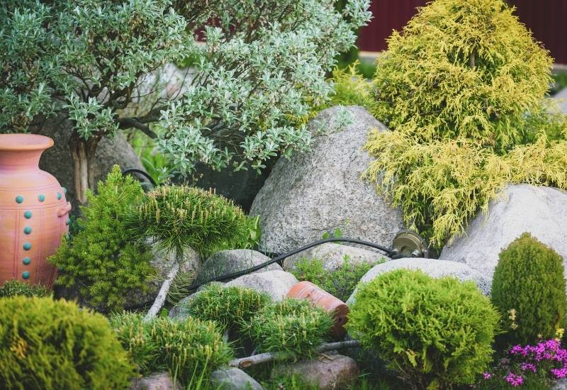 15 Dwarf Evergreen Shrubs For Small Gardens And Landscapes