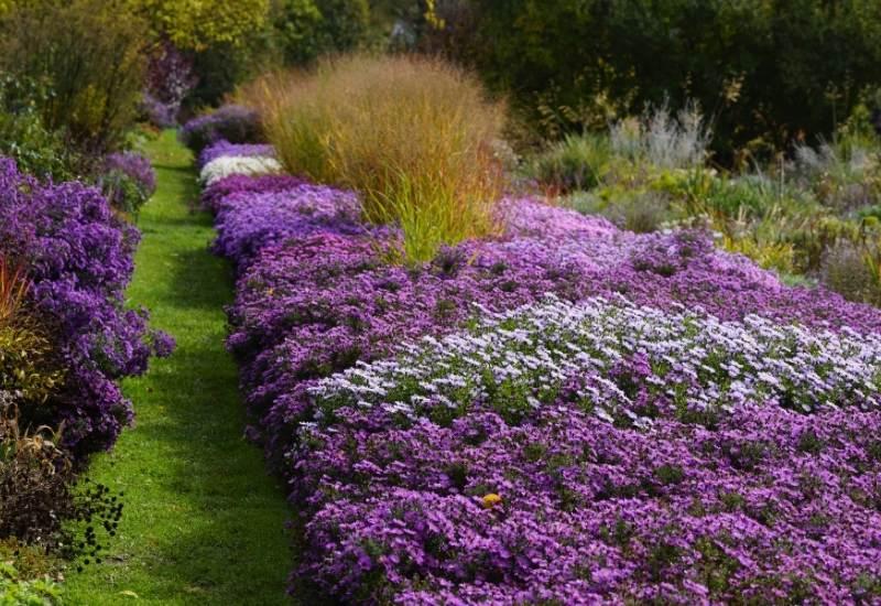 15 Prettiest Purple Annual Flowers To Beautify Your Garden