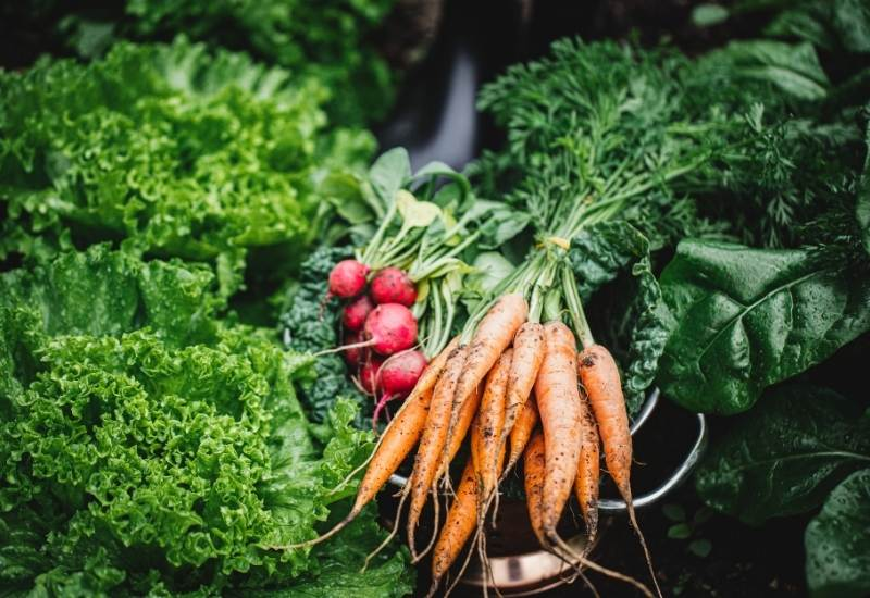 Top 10 Easiest Vegetables To Grow For The First Time Gardeners