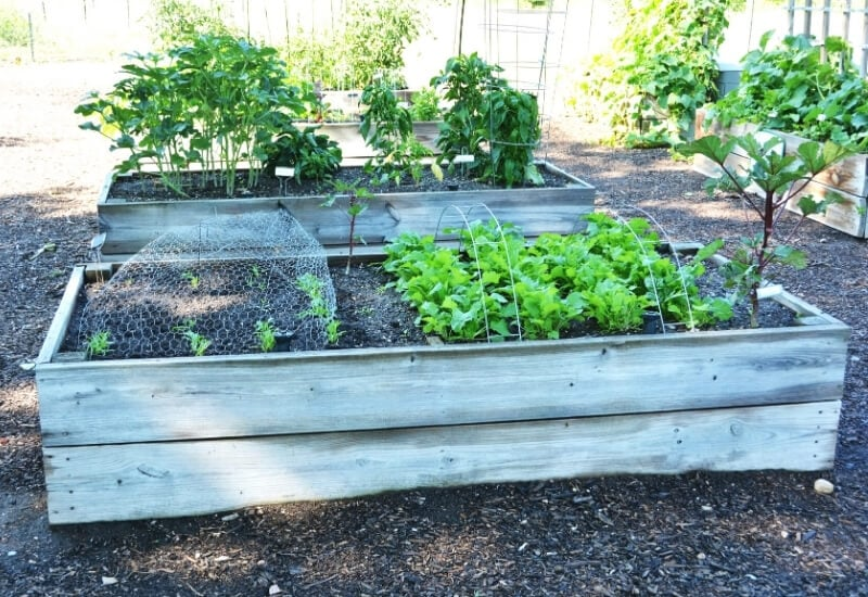 Raised Bed Gardening For Beginners & Planning, Building, Soil Mix, and Planting Guide