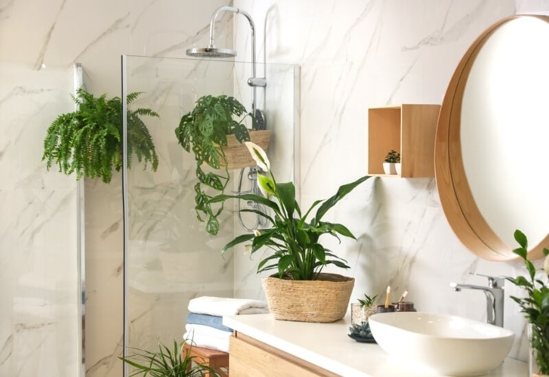 18 Humidity-Loving Shower Plants That Will Thrive in Your Bathroom