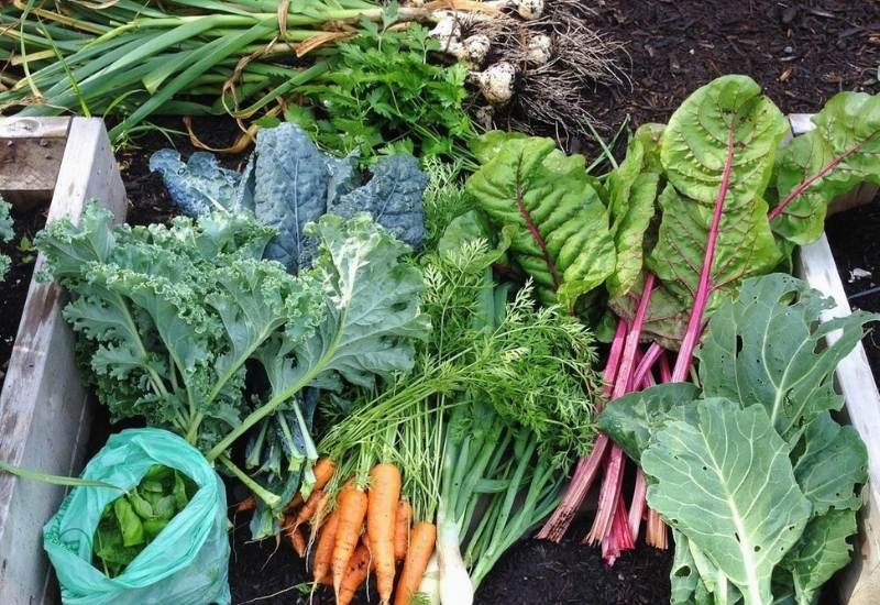 20 Cold-Hardy Winter Vegetables To Plant And Harvest In Your Cool Season Garden