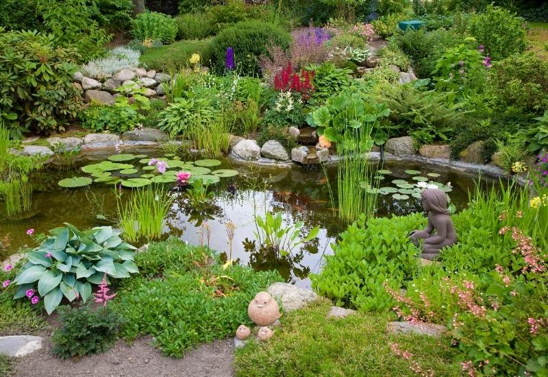 16 Aquatic Pond Plants To Add To Your Functional Water Garden