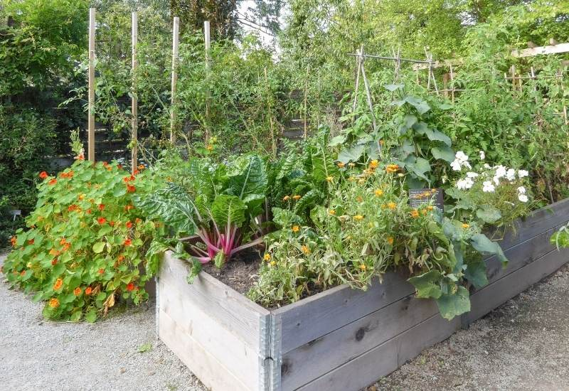 12 Best Companion Plants for Zucchini and Summer Squash 3 to Avoid Planting Around