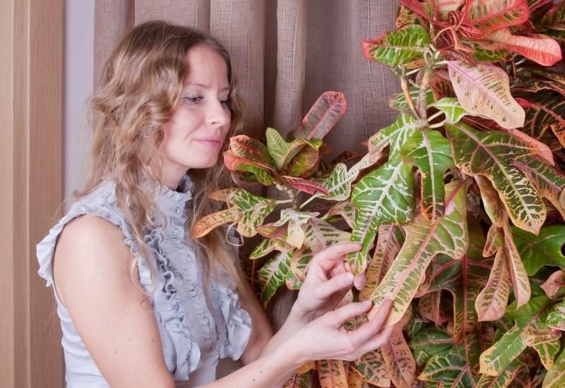 Croton Plant Care: How To Grow And Care For Codiaeum Variegatum