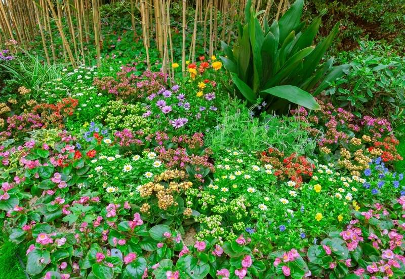 30 Flowering Ground Covers For Adding Color Add Texture To Your Landscape Year After Year