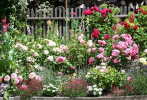 Types Of Roses: 30 Gorgeous Rose Varieties For Your Garden