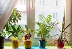 10 Sun-Loving Houseplants For A South-Facing Window