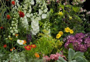 12 Beautiful Deer-Resistant Flowering Annual Plants For Your Garden