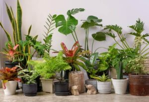 15 Gorgeous Tropical House Plants That Thrive Indoors