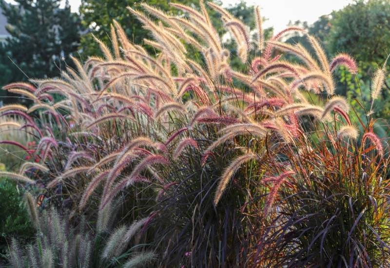 23 Gorgeous Ornamental Grasses For Adding Year-Round Interest To Your Landscape