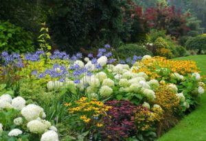 Deer Resistant Perennials 22 Colorful Choices For Sun And Shade (5)