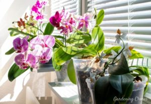 How Much Sunlight Do Orchids Need To Thrive And Bloom?