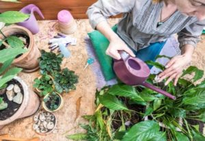 Peace Lily Watering Tips: How And When To Water Your Peace Lily
