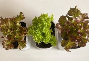 Self Watering Planters: How They Work, DIY Option And Tips For Use
