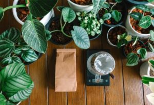 What Plants Like Coffee Grounds and How to Use Them