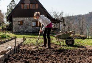 Garden wheelbarrow with soil on the vegetable garden