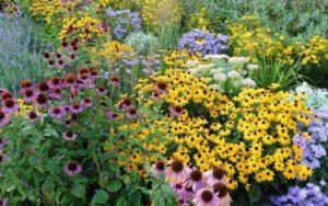 Tall Perennials for the Garden