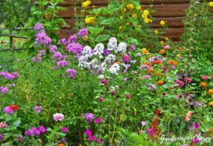 16 Spring-Blooming Annuals To Inject Early Color Into Your Garden
