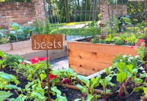 8 Companion Plants To Grow With Beets (And 3 You Should Avoid)