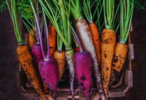 A Guide To Carrots Varieties And When To Plant Them In Your Garden