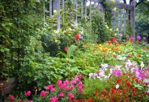 Full Sun Annuals That Bloom All Summer